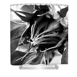 Shower Curtain featuring the photograph Sunflower Beginning by Sandi OReilly