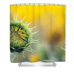 Sunflower Bloom Shower Curtain