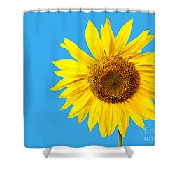 Sunflower Blue Sky Shower Curtain by Edward Fielding