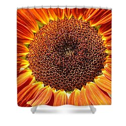 Sunflower Burst Shower Curtain by Kerri Mortenson