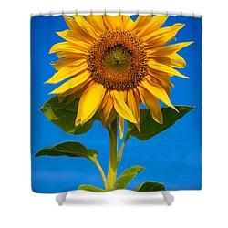 Sunflower Shower Curtain by Carsten Reisinger