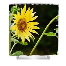Sunflower Cheer Shower Curtain by VLee Watson
