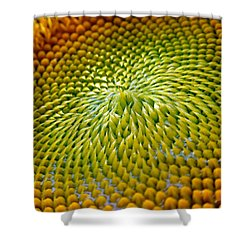Sunflower  Shower Curtain by Christina Rollo
