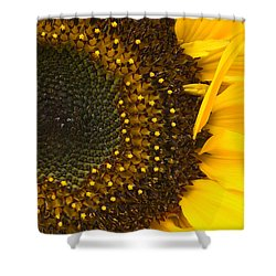 Sunflower Closeup Shower Curtain by Jane McIlroy