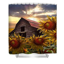 Sunflower Dance Shower Curtain by Debra and Dave Vanderlaan