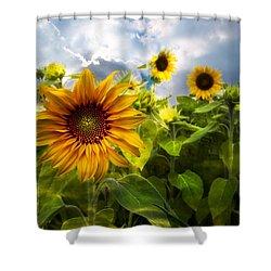 Sunflower Dream Shower Curtain by Debra and Dave Vanderlaan