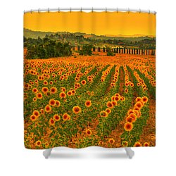 Sunflower Dream Shower Curtain by Midori Chan