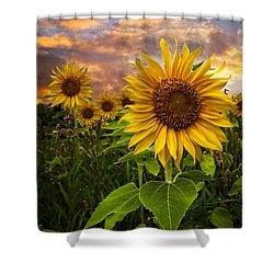Sunflower Dusk Shower Curtain by Debra and Dave Vanderlaan