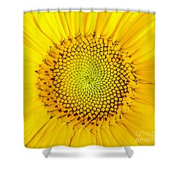 Sunflower  Shower Curtain by Edward Fielding