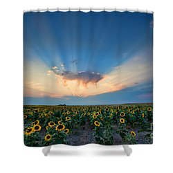 Sunflower Field At Sunset Shower Curtain