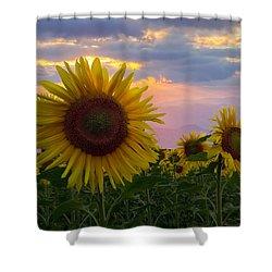 Sunflower Field Shower Curtain by Debra and Dave Vanderlaan