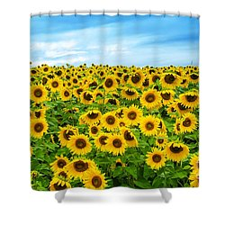 Sunflower Field Shower Curtain by Mike Ste Marie