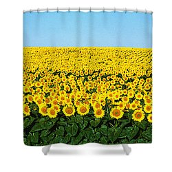 Sunflower Field, North Dakota, Usa Shower Curtain by Panoramic Images