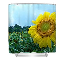 Sunflower Field Of Yellow Sunflowers By Jan Marvin Studios  Shower Curtain