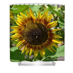 Sunflower Glory Shower Curtain by Luther Fine Art