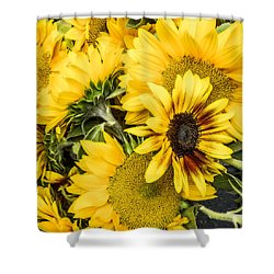 Sunflower Glow Shower Curtain