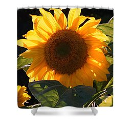 Sunflower - Golden Glory Shower Curtain by Janine Riley
