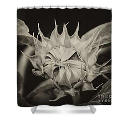 Shower Curtain featuring the photograph Sunflower Grand Opening by Wilma  Birdwell