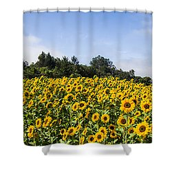 Sunflower Horizon Number 2 Shower Curtain