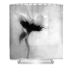 Sunflower In Profile Shower Curtain by Louise Kumpf
