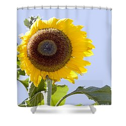 Shower Curtain featuring the photograph Sunflower In The Blue Sky by David Millenheft