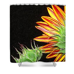 Sunflower In The Making Shower Curtain by Joyce Dickens