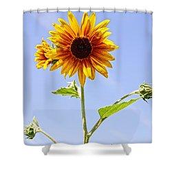 Sunflower In The Sky Shower Curtain by Kerri Mortenson