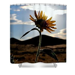 Sunflower In The Sun Shower Curtain by Matt Harang