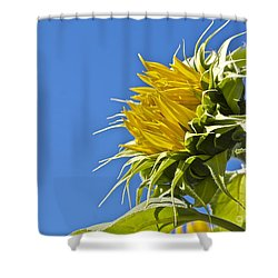 Shower Curtain featuring the photograph Sunflower by Linda Bianic