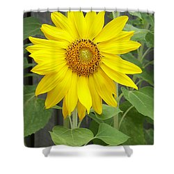 Sunflower Shower Curtain by Lisa Phillips