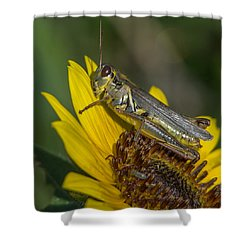 Sunflower Love Shower Curtain by Ernie Echols