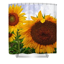 Sunflower Mama And Her Daughters  Shower Curtain
