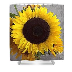 Sunflower Photo With Dry Brush Filter Shower Curtain