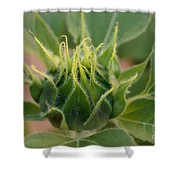 Sunflower Pod Shower Curtain by Kerri Mortenson