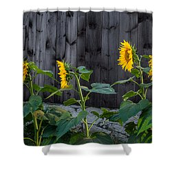 Sunflower Quartet Shower Curtain