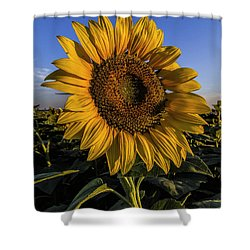 Sunflower Shower Curtain by Rob Graham