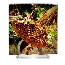 Sunflower Seedless 1 Shower Curtain by James Aiken