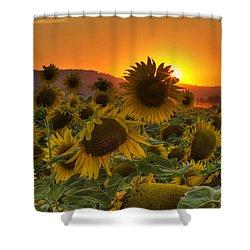 Sunflower Sun Rays Shower Curtain