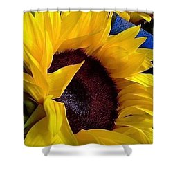Shower Curtain featuring the photograph Sunflower Sunny Yellow In New Orleans Louisiana by Michael Hoard