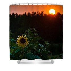 Sunflower Sunset Shower Curtain by Cheryl Baxter
