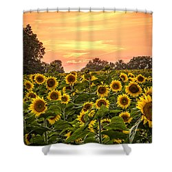 Shower Curtain featuring the photograph Sunflower Sunset by Steven Bateson