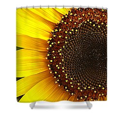 Sunflower Shower Curtain by Tammy Schneider