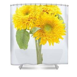 Sunflower Trio Shower Curtain by Anne Gilbert
