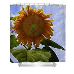 Sunflower With Busy Bees Shower Curtain by Chris Flees