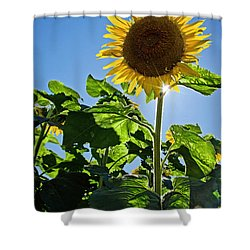 Sunflower With Sun Shower Curtain by Donna Doherty