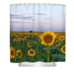 Sunflowers At Sunrise Shower Curtain by Ronda Kimbrow