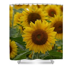 Sunflowers At The Farm Shower Curtain