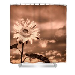 Sunflowers Shower Curtain by Bob Orsillo