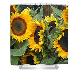 Sunflowers  Shower Curtain by Chrisann Ellis