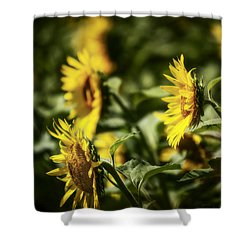 Shower Curtain featuring the photograph Sunflowers In The Wind by Steven Sparks